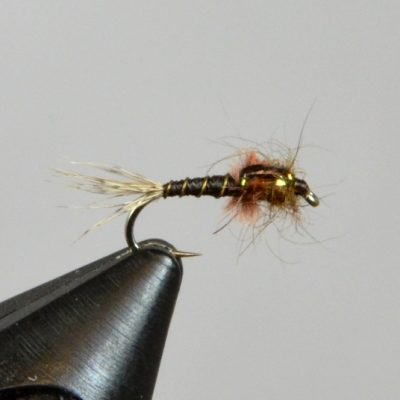 haslam's pmd nymph