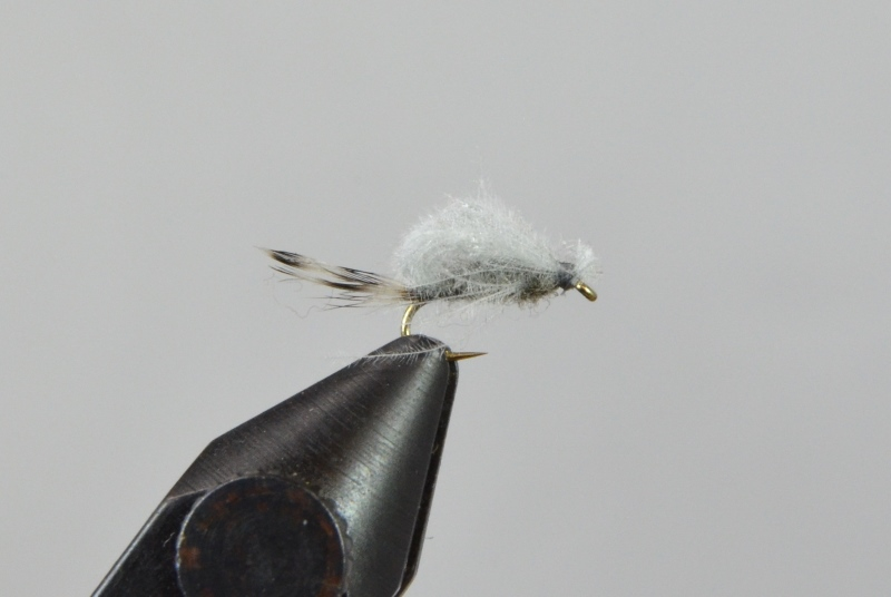 harrop's cdc transitional midge