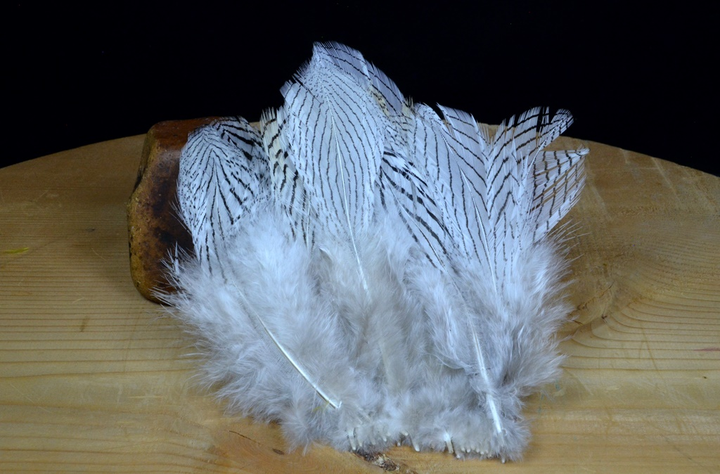 silver pheasant feathers natural