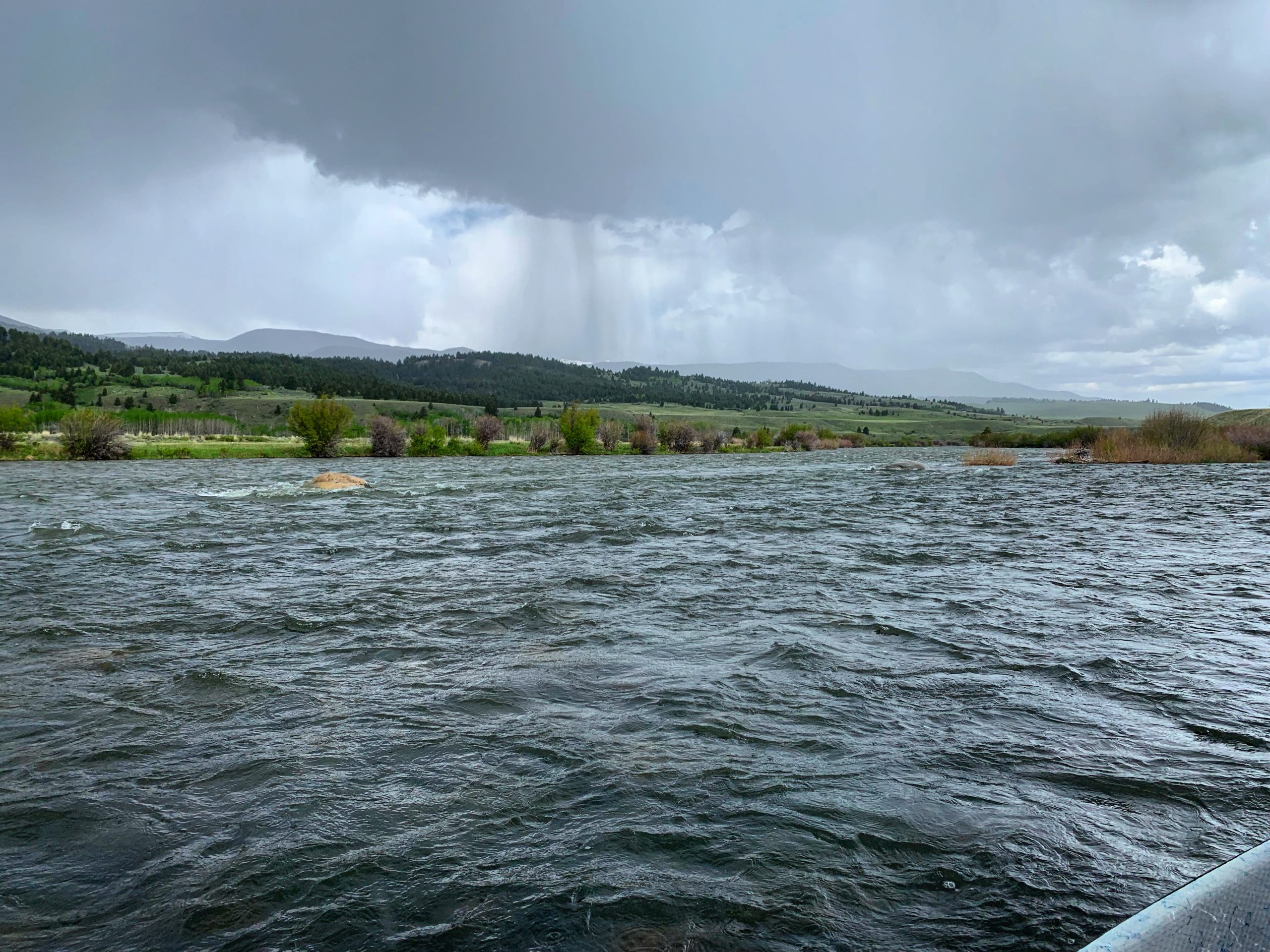 madison river fishing report 6-16-2019